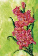 Гладиолус. Размер - 22 х 34 см.