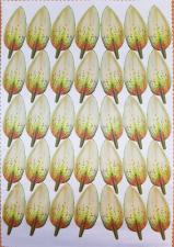 Заготовка для аппликаций на ткани (лепестки лилии) ОАР-66-11,А3