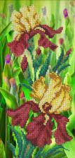 Золотисто-бордовые ирисы. Размер - 14 х 29 см.