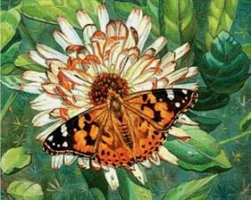 Бабочка на цветке. Размер - 50 х 40 см.