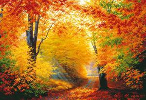 Разноцветная осень. Размер - 39 х 27 см.