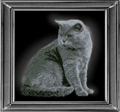 Британская короткошерстная кошка. Размер - 28 х 28 см.