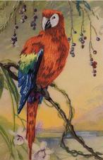Попугай Ара. Размер - 17 х 27 см.