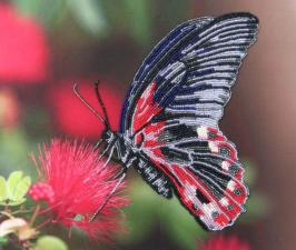 Бабочка 1. Размер - 28 х 24 см.