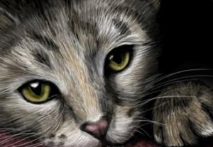 Кошачий портрет. Размер - 50 х 35 см.
