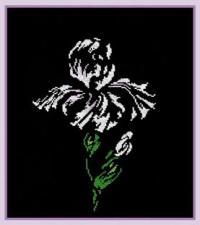 Цветы на чёрном.Ирис. Размер - 26 х 30 см.